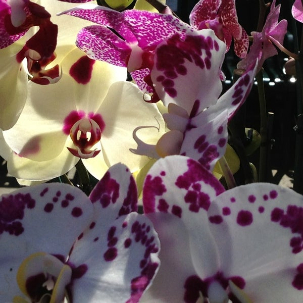Photo taken at Enid A. Haupt Conservatory by Kevin W. on 3/26/2013