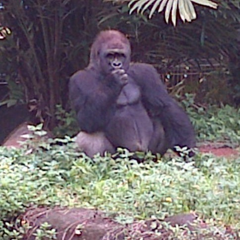 Photo taken at Kebun Binatang Ragunan by Nurlaila S. on 1/14/2013