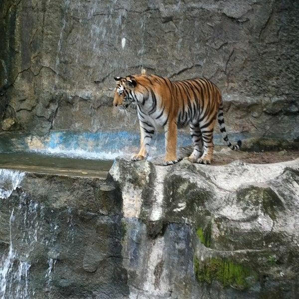 Photo taken at Khao Kheow Open Zoo by Wongsakorn C. on 4/13/2013