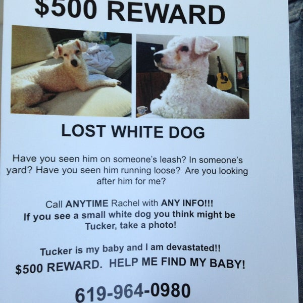 Have you seen Tucker? Lost 4/19/13 reward see flyer.