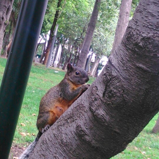 Photo taken at Bosque de Chapultepec by Hilda Carolina B. on 4/19/2014