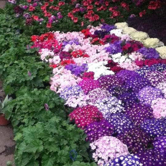 Mercado de plantas y flores madreselva madreselva for Jardin xochimilco