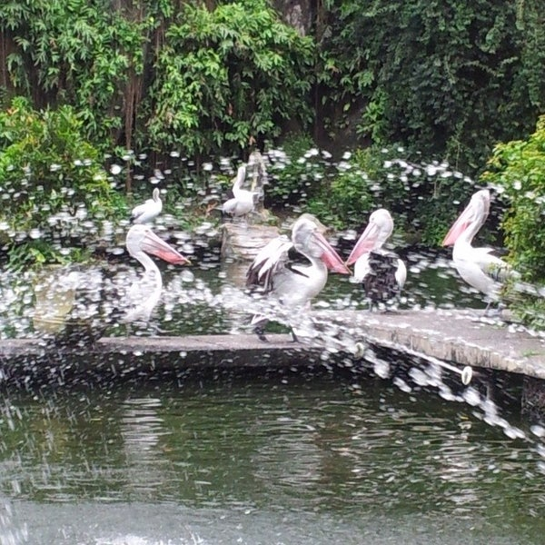 Photo taken at Kebun Binatang Ragunan by Riris S. on 3/27/2014
