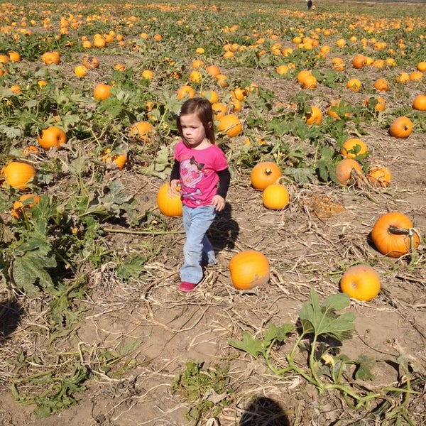 Carolyn's pumpkin patch coupons