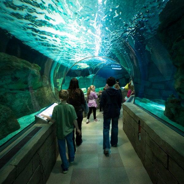 Sea Life Minnesota Aquarium East Bloomington 120 E