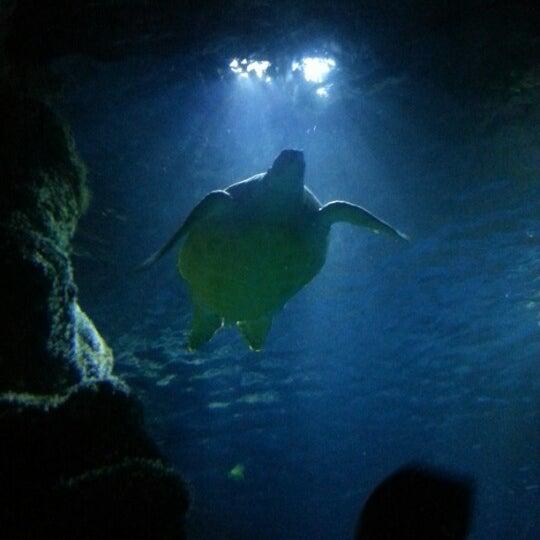 Sea Life London Aquarium Waterloo 113 Tips