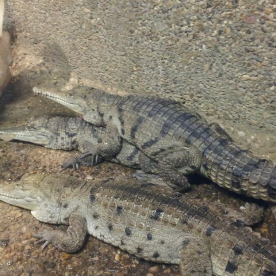 Photo taken at Reptile Gardens by DD Lee K. on 11/18/2012