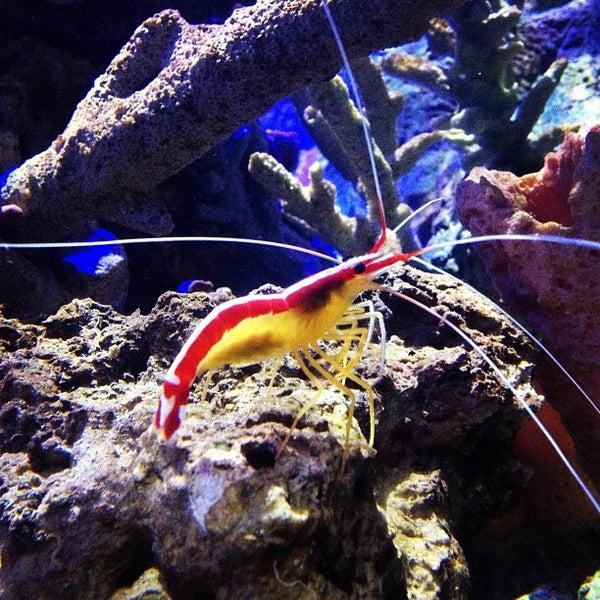 Sea Life Aquarium Tempe Az