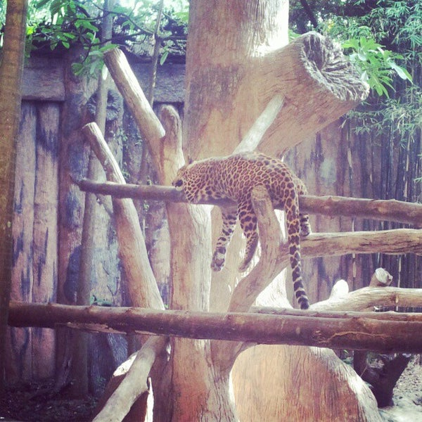 Photo taken at Khao Kheow Open Zoo by Михаил М. on 11/7/2012