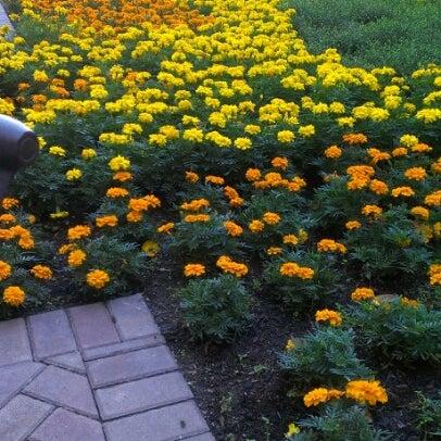 Photo taken at The Westin Kierland Resort & Spa by Jarrod W. on 11/6/2012