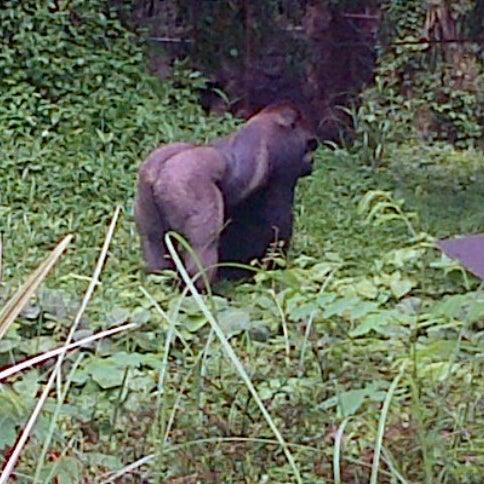 Photo taken at Kebun Binatang Ragunan by Tisya N. on 12/16/2012