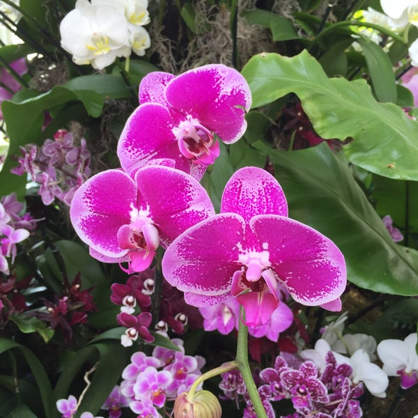 Photo taken at Enid A. Haupt Conservatory by Kara Ann B. on 3/12/2016