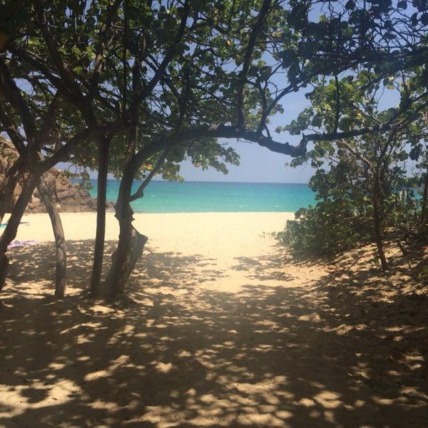 Many shades under the tree right near the beach access.