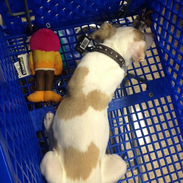 Photo taken at PetSmart by T on 11/21/2013