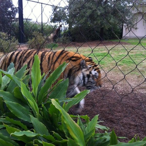 Photo taken at LSU - Mike's Habitat by Caroline B. on 2/23/2013