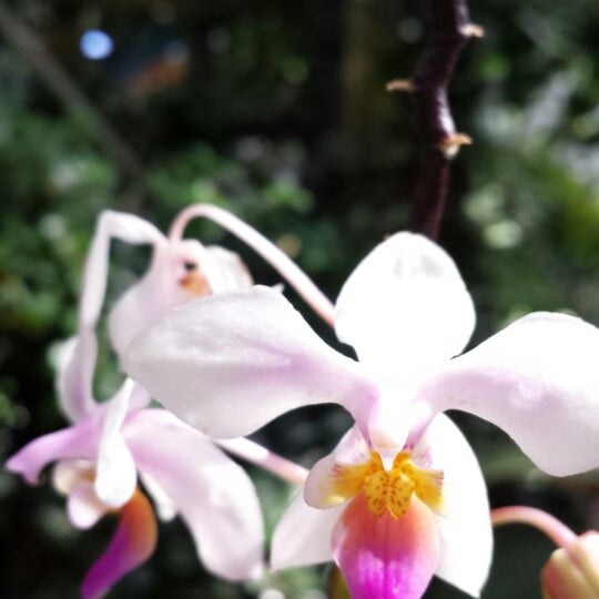 Photo taken at Atlanta Botanical Garden by Tracy S. on 2/18/2014