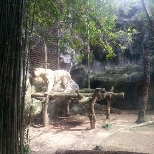 Photo taken at Khao Kheow Open Zoo by Oak K. on 10/15/2012