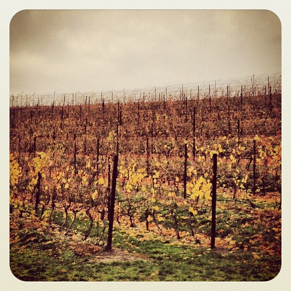 Photo taken at Black Star Farms Winery by dustin d. on 11/3/2012