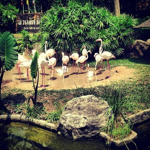 Photo taken at สวนสัตว์เปิดเขาเขียว (Khao Kheow Open Zoo) by Harrisov on 3/18/2013