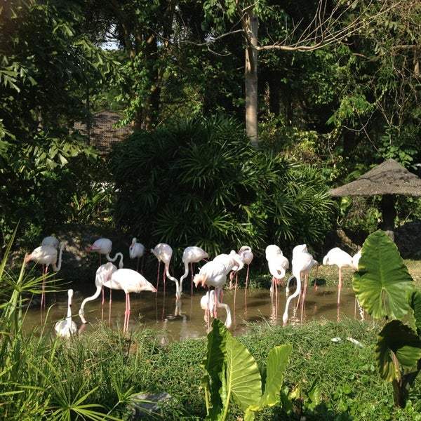 Photo taken at สวนสัตว์เปิดเขาเขียว (Khao Kheow Open Zoo) by kugolf2004 on 12/29/2012