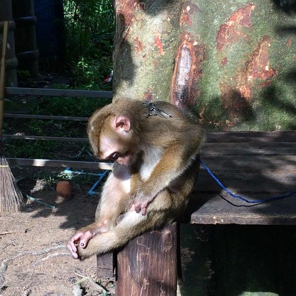 Monkey Training Center - 4 tips