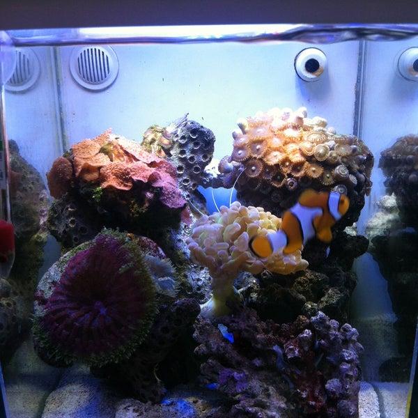Photos At Nature Aquarium West Los Angeles Santa