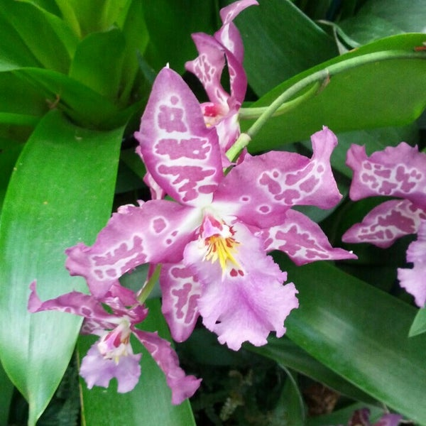 Photo taken at Enid A. Haupt Conservatory by Tudor L. on 4/14/2013