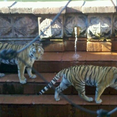 Photo taken at Maharajah Jungle Trek by Jack D. on 1/6/2012