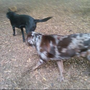 Photo taken at Marcus Garvey Park - Dog Run by Nicholas W. on 6/9/2012