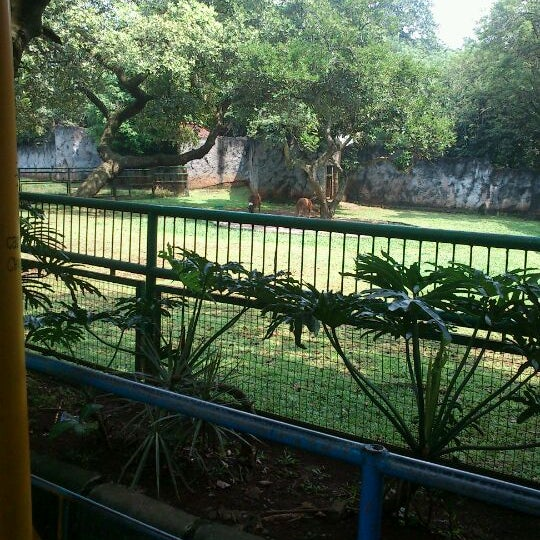 Photo taken at Kebun Binatang Ragunan by Muchsin A. on 5/5/2012