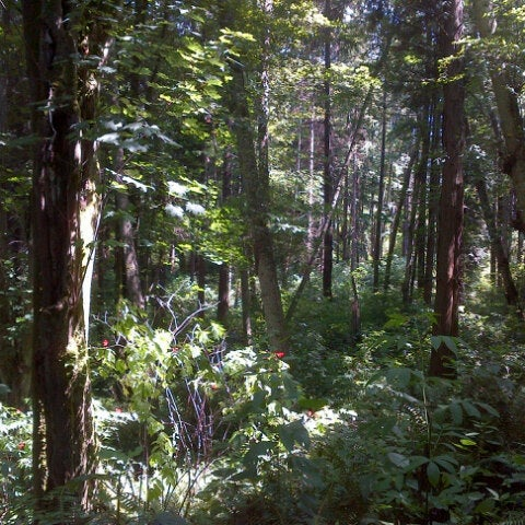 Photo taken at Carkeek Park by Mark B. on 7/8/2012