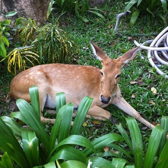 Photo taken at Khao Kheow Open Zoo by 🎀 Ɗ ä ℜ ä 🎀 on 5/26/2012