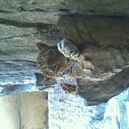 Photo taken at Kebun Binatang Ragunan by Avianto F. on 8/28/2011