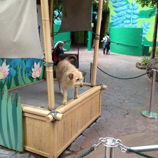 Photo taken at Universal's Animal Actors by Candy-O on 4/26/2012