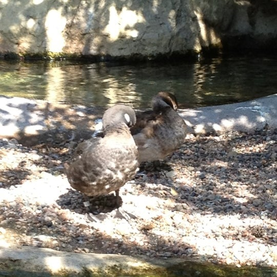 Photo taken at Arctic Aviary by Susan E. on 9/3/2012
