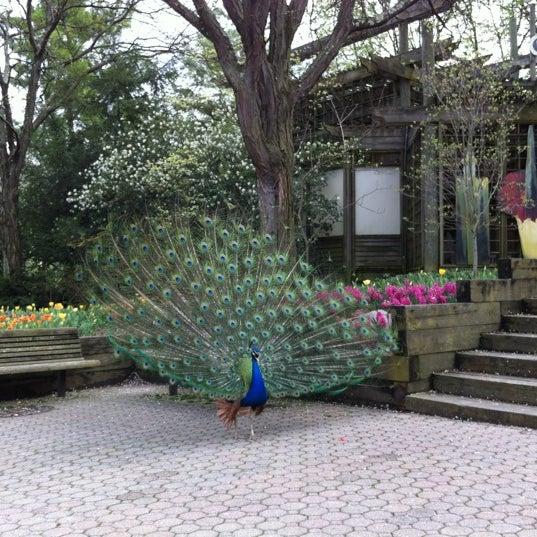 Cincinnati Zoo Botanical Garden Avondale 3400 Vine St