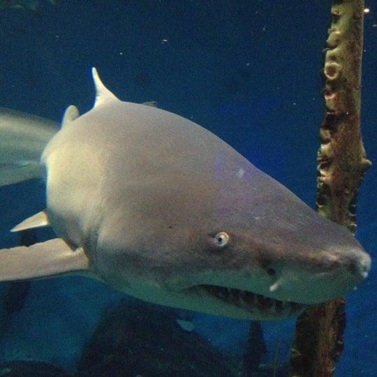 Maritime Aquarium South Norwalk 66 Tips From 4406 Visitors