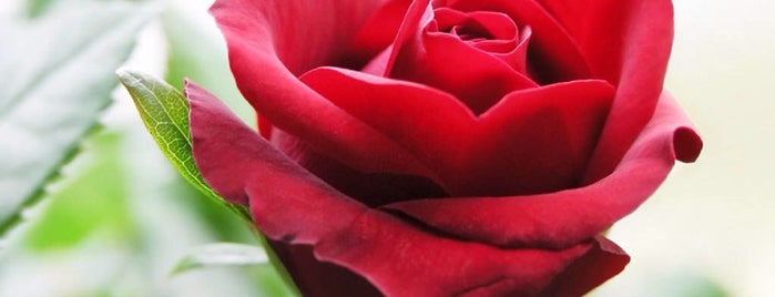 ♥ Valentine's Daypocalypse 2014 ♥ is one of Listpocalypse.