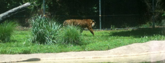 Dickerson Park Zoo is one of Jennifer's tips.