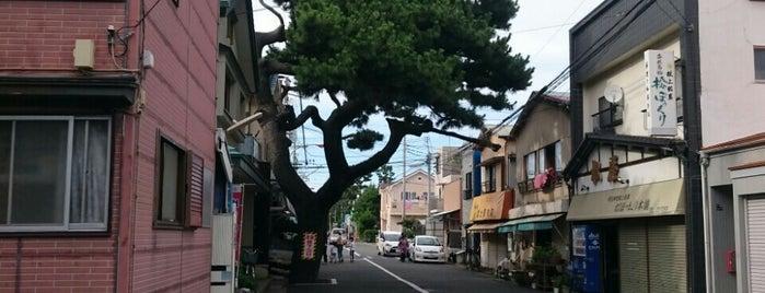 扇の松 is one of ☆.