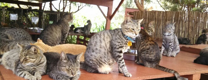 Lanai Animal Rescue Center is one of Cats in Hawai'i.