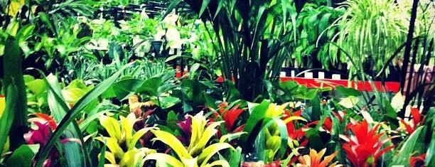 Dubai Garden Center دبي جاردن سنتر is one of Best places in Dubai, United Arab Emirates.