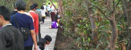 Ekowisata Mangrove is one of Sparkling Surabaya.