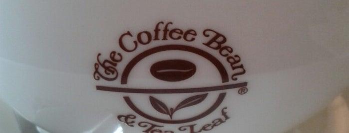 The Coffee Bean & Tea Leaf is one of My Doha..
