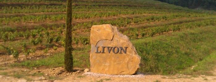 Aziende Agricole Livon is one of Friuli.