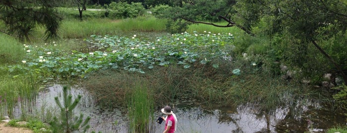 물향기 수목원 (Mulhyanggi Arboretum) is one of Favorite Great Outdoors.