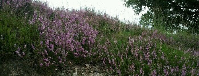 Heide - Kalmthout is one of Great outdoors Brabant en Zeeland.