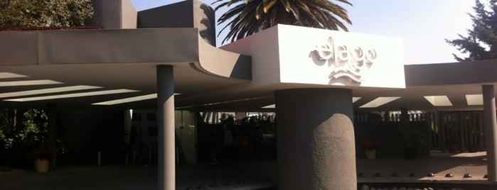 Restaurante El Lago is one of Editor's Choice.