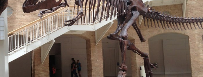 Fernbank Museum of Natural History is one of Atlanta.