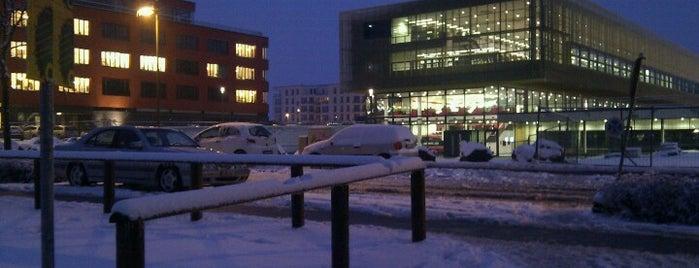 goethe universität frankfurt casino